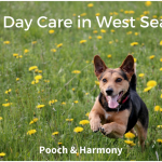 dog day care in west seattle