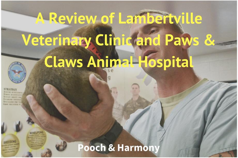 lambertville veterinary clinic