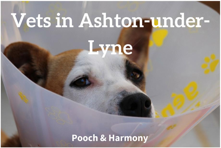 vets in ashton-under-lyne