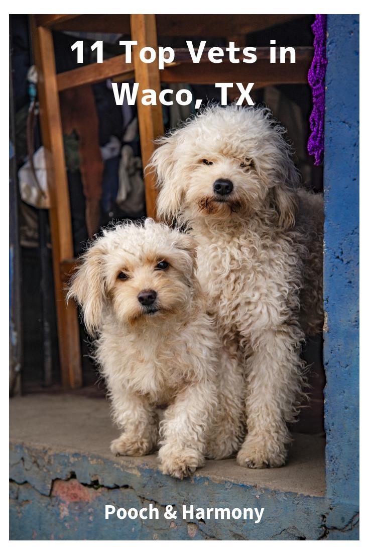 vets in waco texas