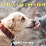 doggy day care in hereford
