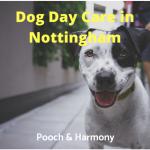 dog day care in nottingham