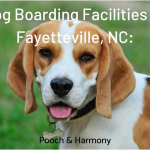dog boarding facilities in fayetteville