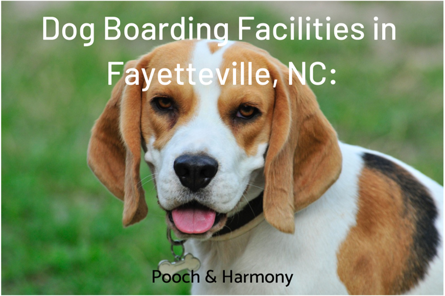 dog boarding facilities in fayetteville