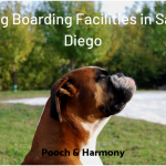 dog boarding facilities in san diego