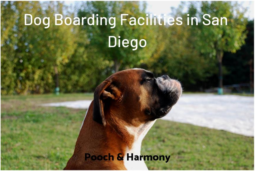 dog boarding facilities in san diego