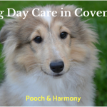 dog day care in coventry
