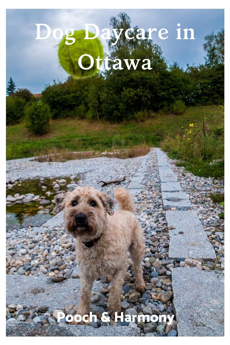 dog day care ottawa ontario