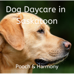 dog daycare in saskatoon