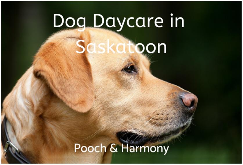 dog daycare in saskatoon