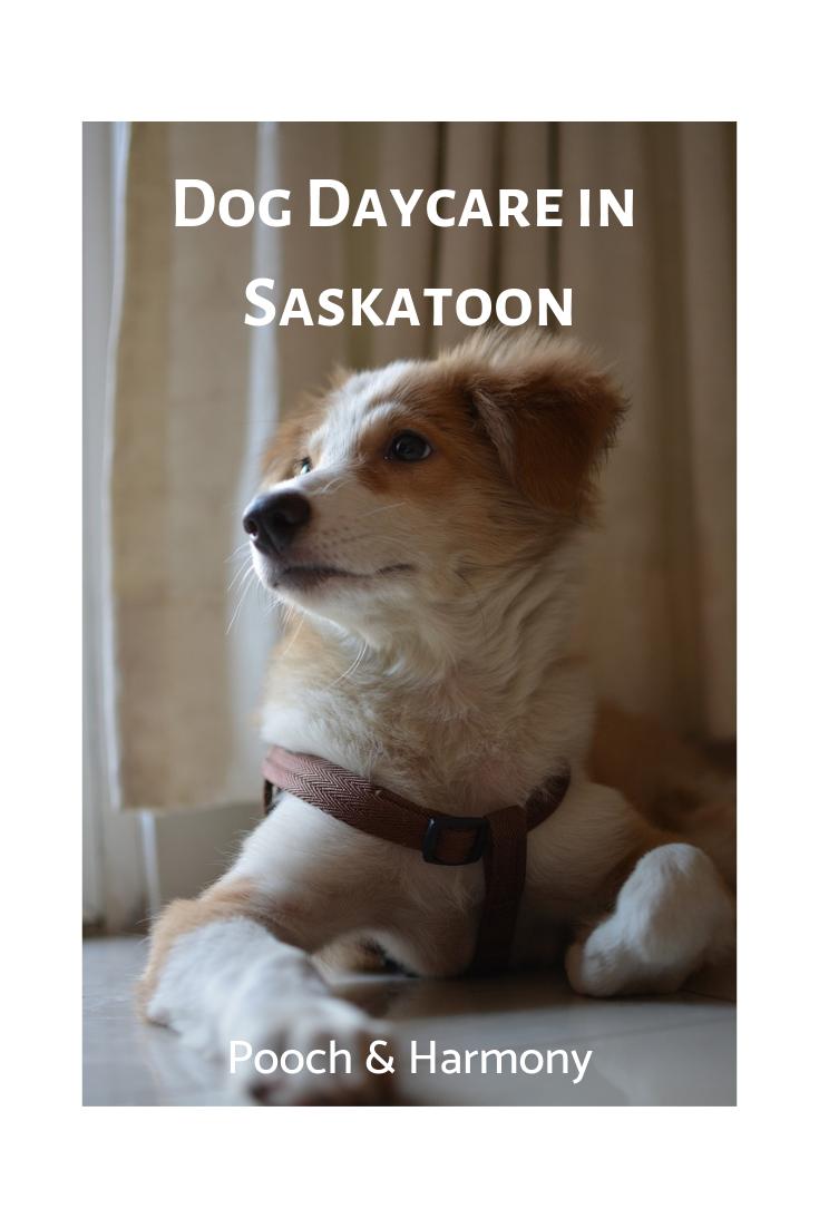 doggie daycare in saskatoon