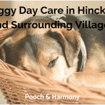 doggy day care in hinckley