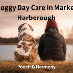 doggy day care in market harborough