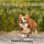dog boarding facilities in greenville sc