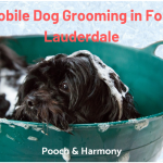 mobile dog grooming in fort lauderdale