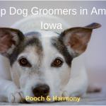 dog groomers in ames iowa