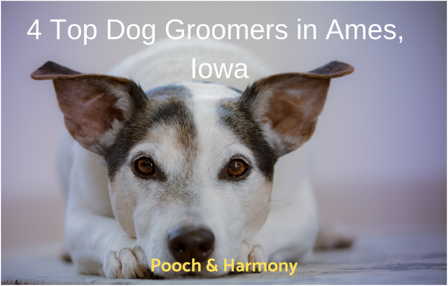 dog groomers in ames iowa