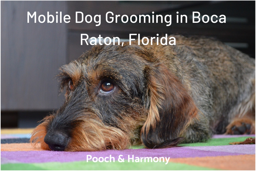 mobile dog grooming in boca raton