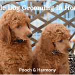 mobile dog grooming in houston