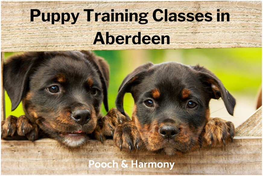 puppy training classes in aberdeen
