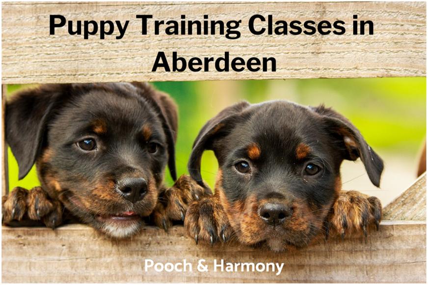 puppy training classes in aberdeen