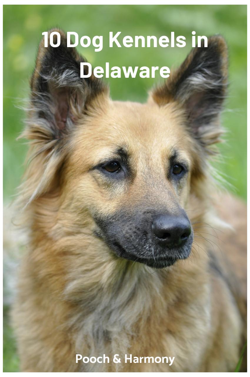 dog boarding in delaware