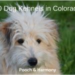 dog kennels in colorado