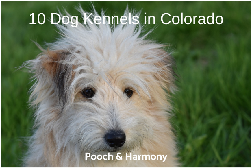 dog kennels in colorado