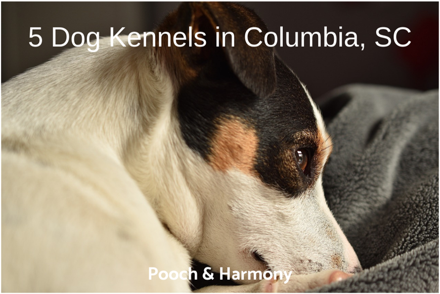 dog kennels in columbia sc