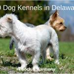 dog kennels in delaware