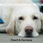 mobile dog grooming in dublin
