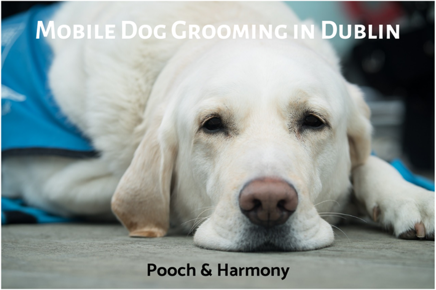 mobile dog grooming in dublin