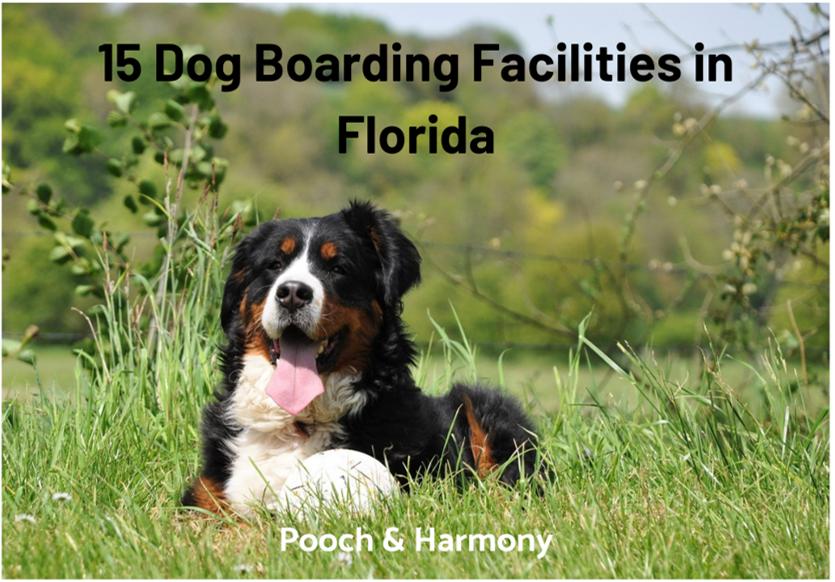 dog boarding facilities in florida