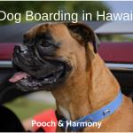 dog boarding in hawaii