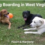 dog boarding in west virginia