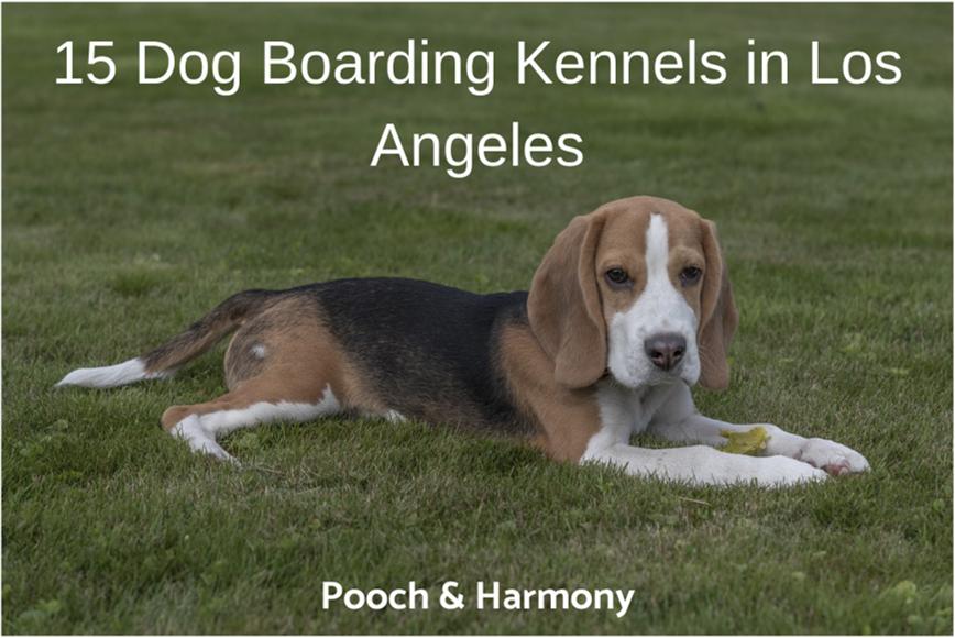 dog boarding kennels in los angeles