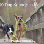 dog kennels in maine