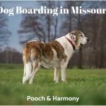 dog boarding in missouri