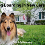 dog boarding in new jersey