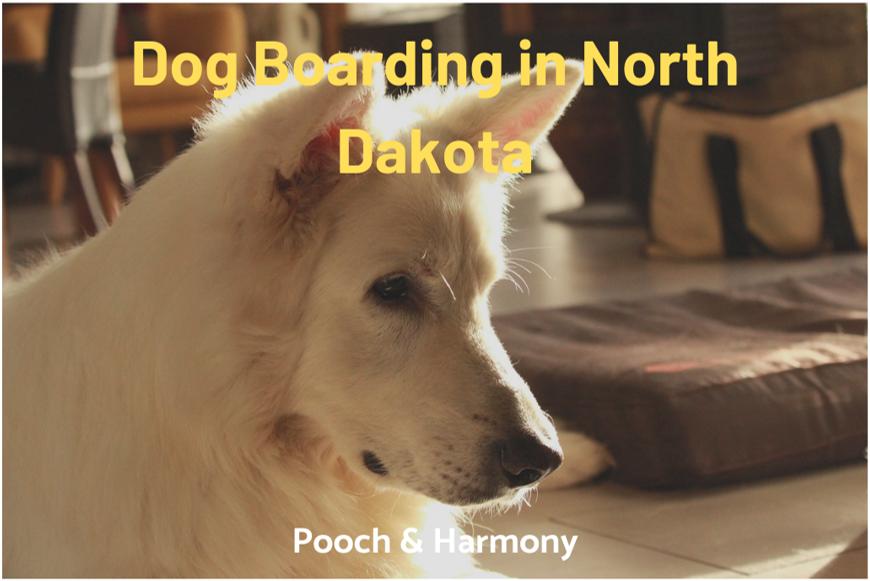 dog boarding in north dakota