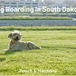 dog boarding in south dakota