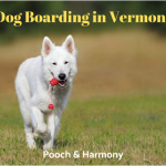 dog boarding in vermont