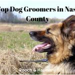 dog groomers in nassau county
