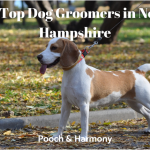 dog groomers in new hampshire