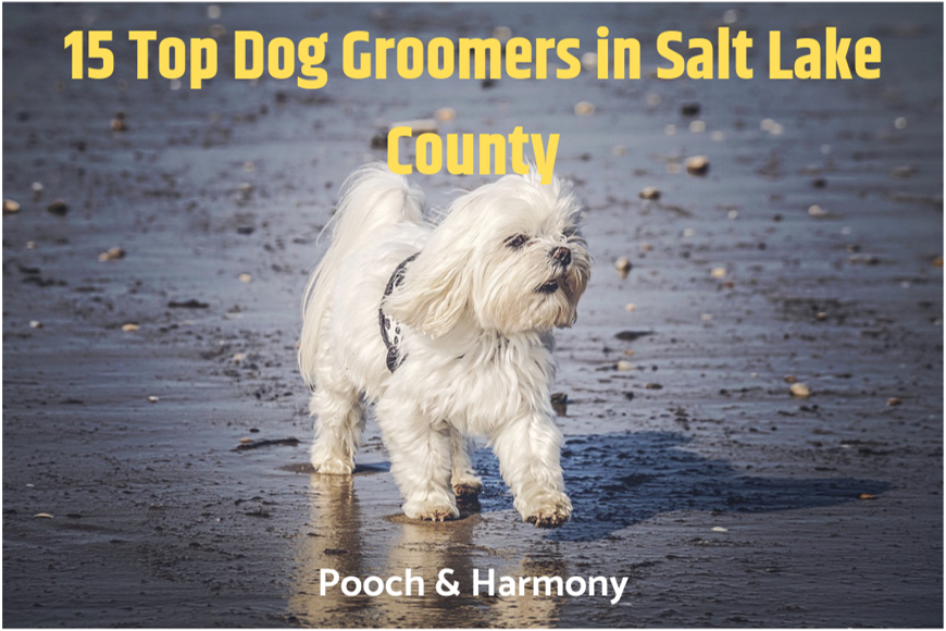 dog groomers in salt lake county