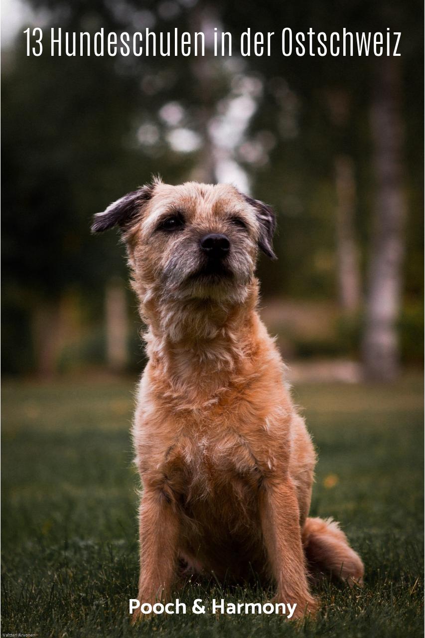 Hundeschulen Ostschweiz