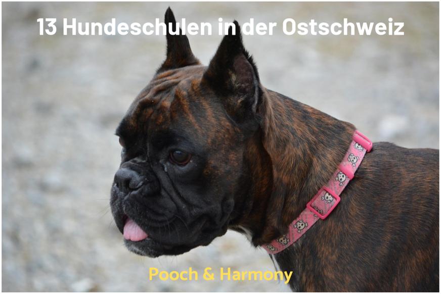 Hundeschulen in der Ostschweiz