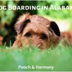 dog boarding in alabama