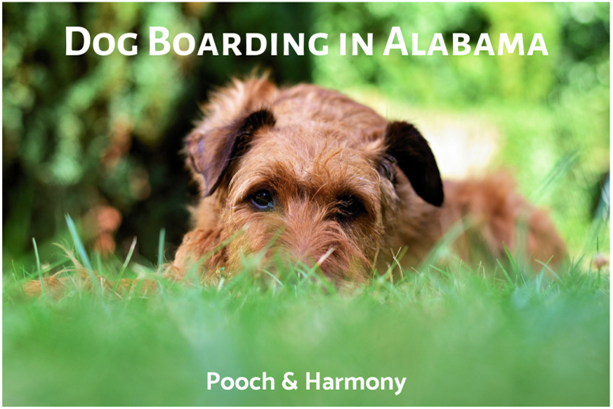 dog boarding in alabama