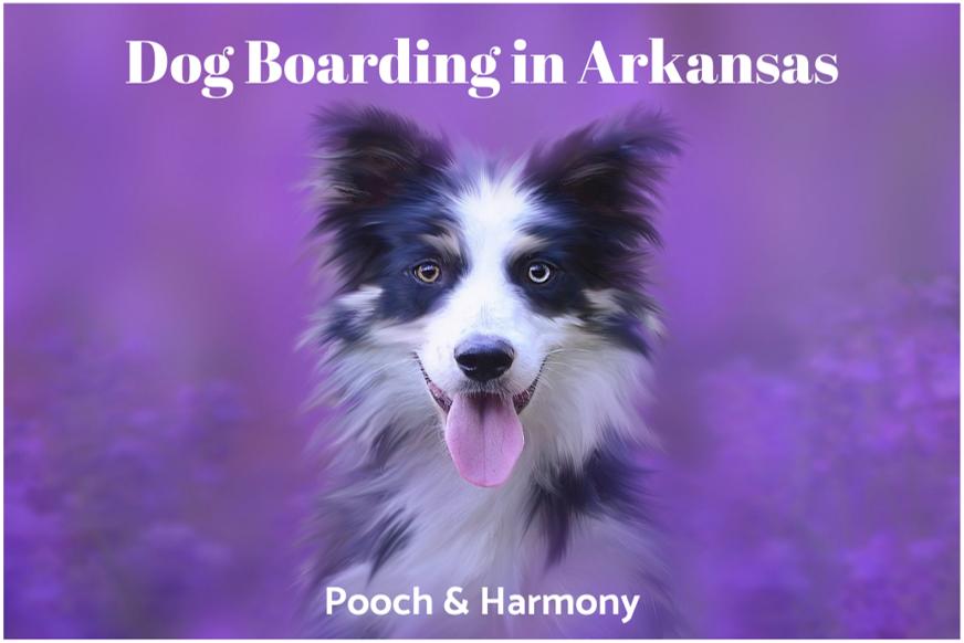 dog boarding in arkansas